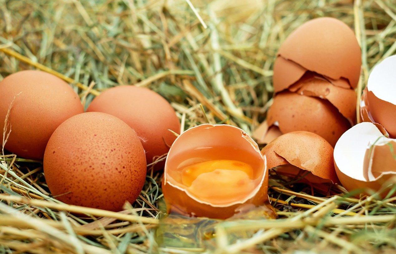 Le guide des œufs : les différentes cuissons