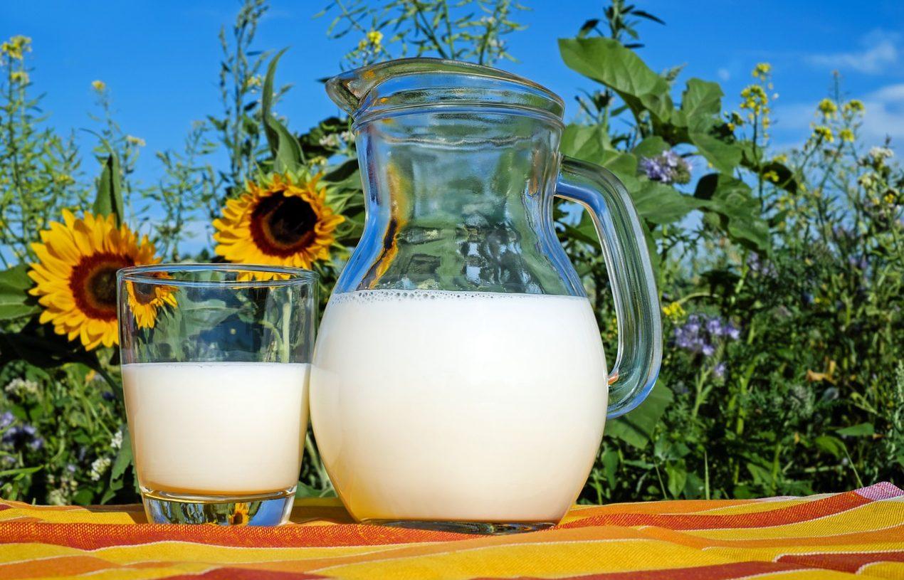 Le guide du lait : les différents types de lait animal, végétal et alternatif